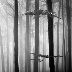 This is another location that would work well for conference of the birds. I think the contrast between on the monochromatic forest and the colorful birds would really make the actors pop on stage. A look similar to this could definitely be achieved with white back light and the fog machine.