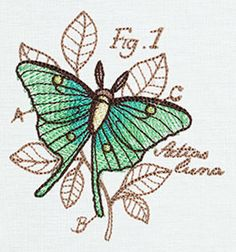 Create a crafty bug collection with this Actias luna design, accented with colorful sheer stitching.
