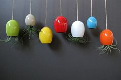 HALF OFF SALE large green hanging airplant pod by mudpuppy... I want these hanging above my piano! so pretty!