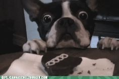 I+want+you+so+bad+Tumblr+Gif | Posted in Fun , Pics and Vids Tagged funny animal gifs