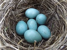 Just a little Creativity: DIY Wood Speckled Robins Eggs {#pinchallenge Number 6}