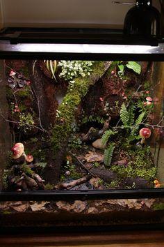 Gecko Terrarium, Reptile Terrarium, Lizard Tank, Pet Tarantula, Frog Tank, Gecko Habitat, Reptile Room, Vegetable Garden Planning, Crested Gecko