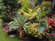 Fall In Lindau0027s Garden On Bainbridge Island | Fine Gardening