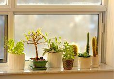 Window plant display