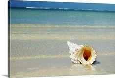 Tropical Seashell