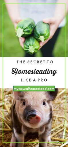 Essential homesteading wisdom tips and advice. Learn what it takes to homestead.