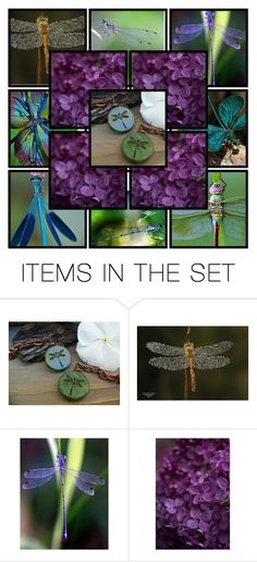 """""""In Love with Dragonflies"""" by bonartsstudio ❤ liked on Polyvore featuring art"""