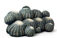 "Cojines ""Canapé Cactus"" by Maurizio Galante."
