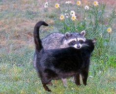 creepy kitties