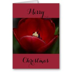 Merry Christmas Red Tulip Greeting Card