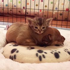 Abandoned Puppy and Stray Kitten Become the Most Adorable Best Friends - My Modern Met
