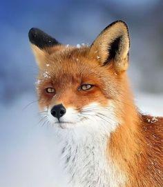 Hayvanlar Aleminden Muhteşem Kareler foto galeri