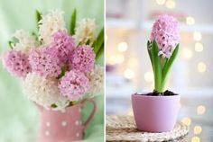 Tavaszváró virágpompa a lakásban – 65 káprázatos ötlet