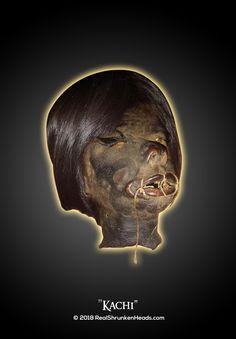 "Real Shrunken Head Photo.  "" Kachi"" www.RealShrunkenHeads.com Tsantsa: Oddities & Curiosities"