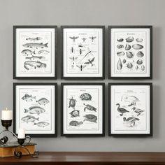 Uttermost Science Studies Vintage Art - Set of 6 - Wall Art at Hayneedle