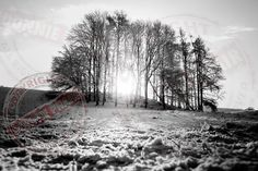 Trees. Colebrooke Estate in Winter. www.donniephair.com