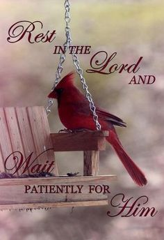 Psalm 37:7 ~ Rest in the Lord and wait patiently for Him...