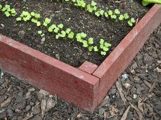 Odla i pallkrage – här är allt du måste veta | Leva & bo Raised Garden Beds, Raised Beds, Vegetable Garden, Outdoor Gardens, Vegetables, Plants, Tips, Vegetables Garden, Flower Beds