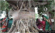 Marriage With Peepul Tree Before Marrying Her Fiance.  Bride to be who possess a Manglik Dosh or curse or evil influence has to perform the ritual of marriage with a peepul tree or banana tree. Actress Aishwarya Rai Bachchan also went through this practice of ritual. And many other people still follow it till today.