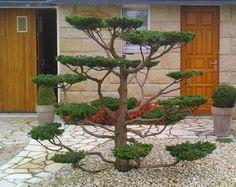 Topiary Garden, Bonsai Garden, Beautiful Landscapes, Beautiful Gardens, Moss Wall Art, Japan Garden, Tree Sculpture, Garden Borders, Back Gardens