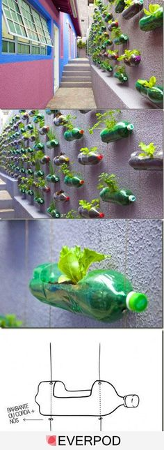 With a bit of inagination and greenery that bleak, dull wall can be turned into a herb garden and by recycling old cooldrink bottles you