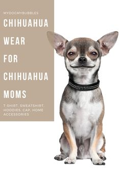 Dog clothes and gifts for humans! Dog t-shirts, dog-hoodies, dog-sweatshirts! Plus dog essential for dog homes! Make your dog proud of you! Chihuahua Love, Chihuahua Puppies, Yorkie Clothes, Dog Facts, Dog Wear, Dog Hoodie, Dog Boarding, Dog Owners, Dog Mom