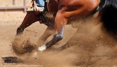 Healthy Hock Guide~Five facts to know about your horse's hocks.