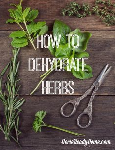 Develop A The Moment Upon A Dream Fairy Tale Birthday Bash How To Dehydrate Herbs It's Quicker And Easier Than Air Drying Them Spices And Herbs, Fresh Herbs, Smoothies Vegan, Dehydrated Food, Dehydrator Recipes, Canning Recipes, Canning Tips, Healing Herbs, Growing Herbs