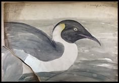 Exploring the History of 19th-Century Ornithology and Scientific Illustration through the Works of John Gould | National Endowment for the Humanities