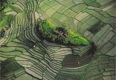 Islet in the terraced rice fields of Bali, Indonesia. photo by Yann Arthus Bertrand Places Around The World, Travel Around The World, Around The Worlds, Arthus Bertrand, Nature Sauvage, Birds Eye View, Aerial Photography, White Photography, Aerial View