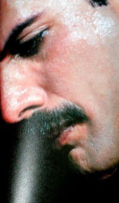 Freddie Mercury...  Inspiración, luz y un beso de vaca!