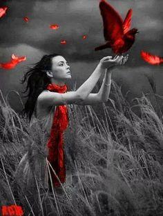 Kimse beni güneşle tanıştırmayacak kimse beni serçelerin şölenine götürmeyecek uçmayı anımsa.. kuş ölümlüdür.. FURUĞ