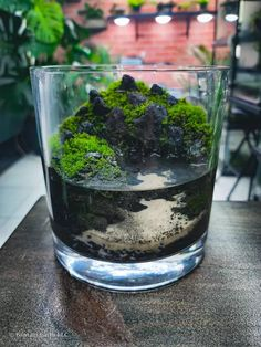 Mini Paludarium/aquaterrarium Mini Terrarium, Terrarium Plants, Indoor Water Garden, Indoor Plants, Mini Plants, Bonsai, Houseplants, Rocks, Aquascaping