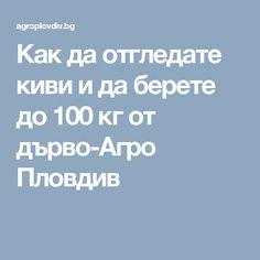 Как да отгледате киви и да берете до 100 кг от дърво-Агро Пловдив