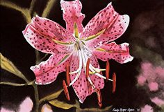 Oriental Lily by Cindy Agan Watercolor ~ 8 x 11
