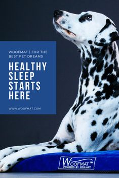 Get your Woofmat at the very special, time limited, discounted price! All Dogs, Best Dogs, Dog Sleeping, Dog Health Tips, Healthy Sleep, Dog Products, Pet Beds, Four Legged