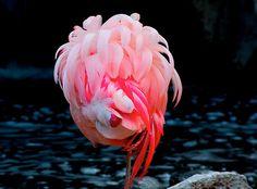 http://www.vormplatform.com  #flamingo #bird #pink