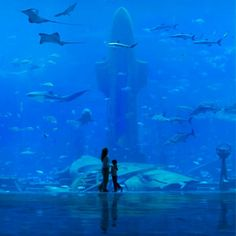 Under Water Hotel Dubai - Hope to visit this someday! What do you think?