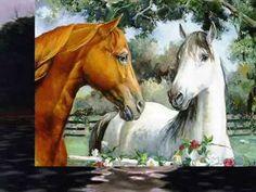 Krzysztof Cwynar-białe konie