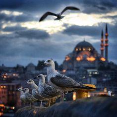✿ ❤ Ne güzelsiniz! İstanbul (By abdullahzaza)