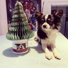 STEINKRAFT Zeolith - das Weihnachtsgeschenk für Hunde - Chihuahua @jack.the_.chihuahua Christmas Presents For Dogs, Collie Dog, Toller Dog, Litter Box, Farm Animals