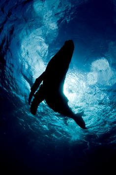 Underwater humpback whale- kinda spooky but gorgeous at the same time