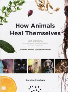 Caroline Ingraham  Blog - how animals heal themselves.  Essential oils and herbs.  Zoopharmacognosy