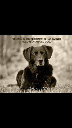 Adopt a senior dog!