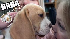 Beagle, Photo S, Youtubers, Labrador Retriever, Fan, Instagram, Amazing, Celebrity Weddings, Adopt A Dog
