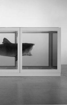 Damien Hirst #art #shark #williever fuckingseethis