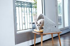 Camas e casulos modernos para gatos - limaonagua