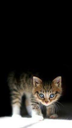 Kitty cat gorgeous & adorable