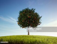 Stock Photo : Apples and oranges growing on tree