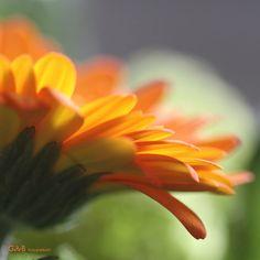 I love orange - #GdeBfotografeert